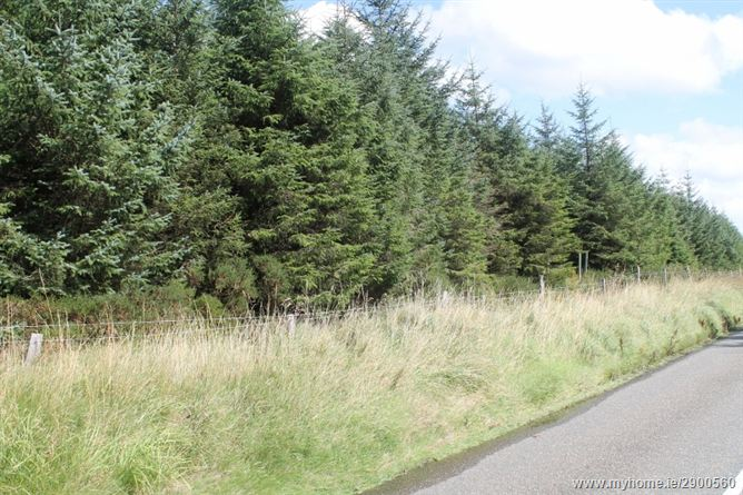 Mature Forestry Plantation c. 124 acres, Lockstown Upper, Valleymount, Blessington, Wicklow