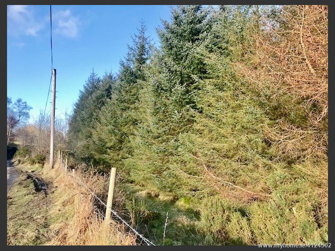 Mature Forestry Plantation c. 130 Acres/ 52.61Ha., Luglass Lower & Knocknaboley, Hollywood, Wicklow