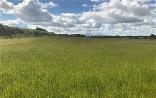 C. 7.75 Acres at Killerig, Killerig, Carlow