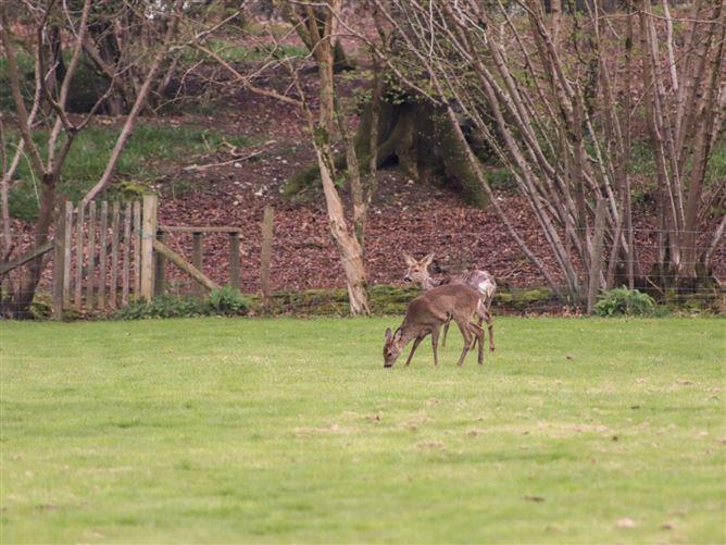 Main image for Deer lodge at Chapel Lodges,Wimborne Minster, Dorset, United Kingdom