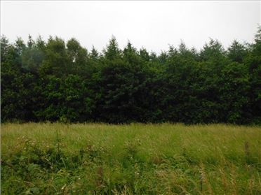 Photo of 35 Acres Forestry, Gaulmoylestown