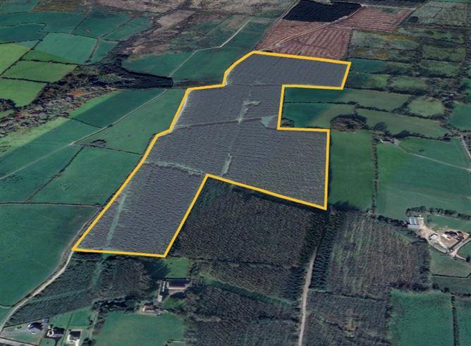 Main image for Forestry Plantation at Knockane, Firies, Killarney, Kerry