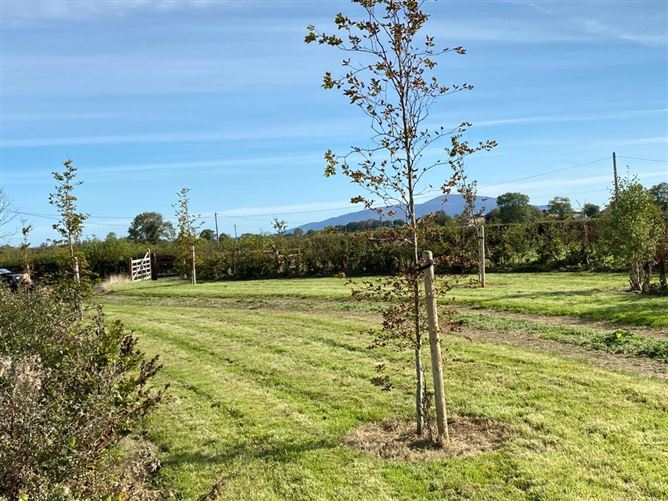 Main image for Young Grove,Ballyclerihan,Co. Tipperary