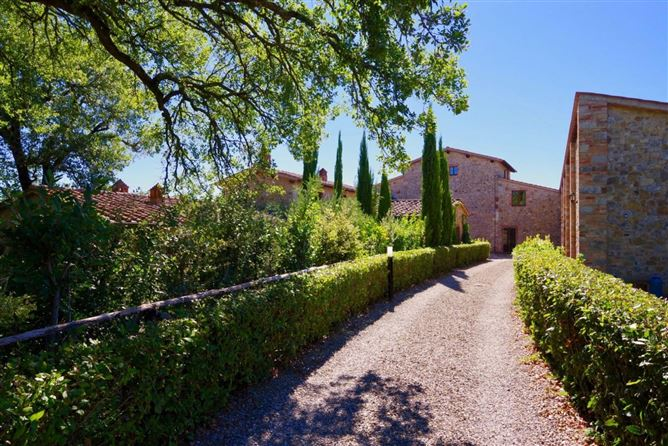 Main image for Olive Tree Outlook,Florence,Tuscany,Italy