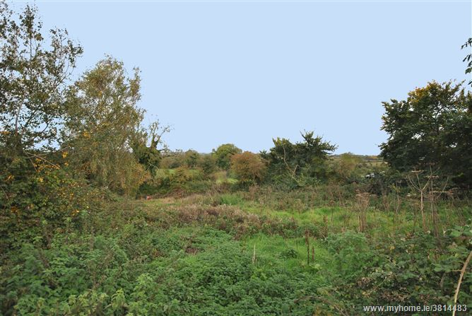 Tara Hill, Gorey, Wexford
