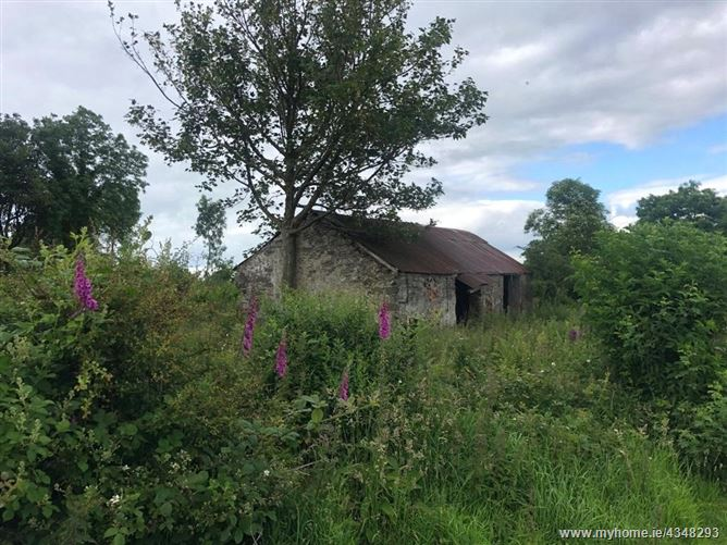 Main image for Agri. Lands 4.43 HA (10.96 Acres), Ballygreany, Clontibret, Co. Monaghan