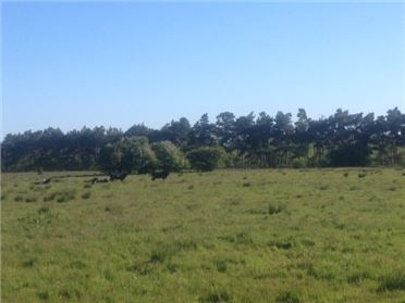 Photo of c13.2 Acres (5.24 HA), Maddenstown South, Nurney, Kildare