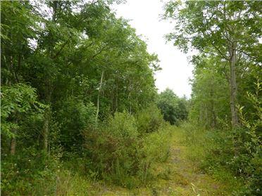 Main image of Forestry Land, Knappaghbeg, Westport, Co Mayo