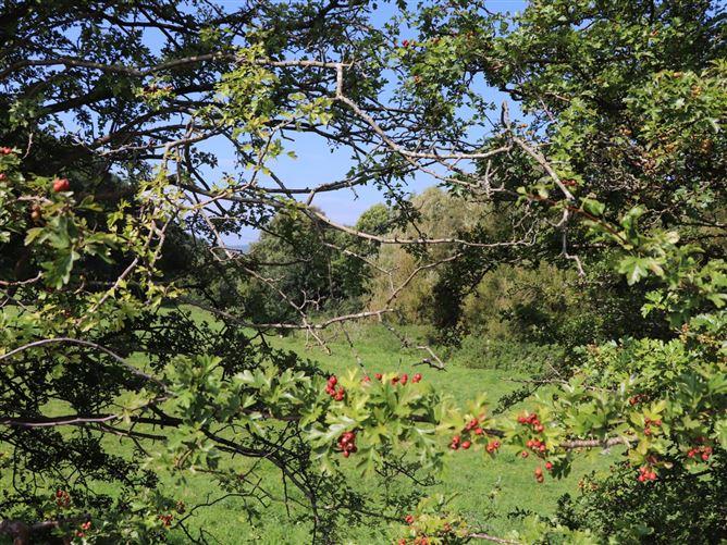 Main image for October Cottage,Caerwys, Flintshire, Wales