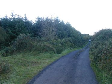Main image of Forestry Land at Killary, Ballina, Tipperary