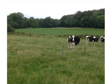 Photo of 24 Acre Non-Residential Agricultural Holding, Caherlag, Glanmire, Cork City