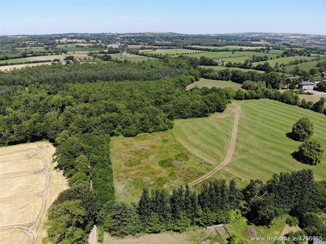 Main image for Mobarnane Wood, Fethard, Tipperary