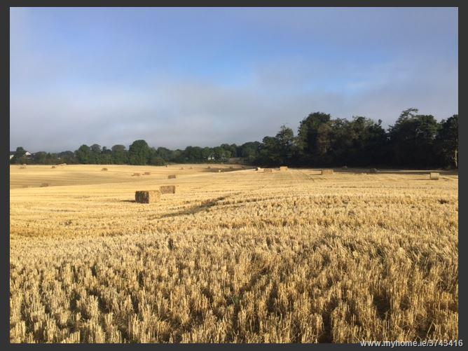 c. 72 Acres (Swiftsheath) - In Lots, Jenkinstown, Kilkenny