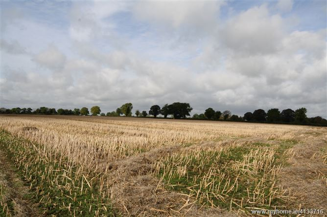 Photo of 18.5 Acres, Martinstown, The Curragh, Kilcullen, Kildare