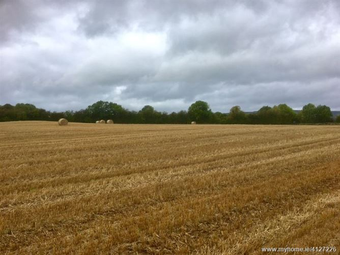 Photo of 24.192 Acres at Kilmartin, Borris-in-Ossory, Laois
