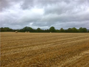 Main image of 24.192 Acres at Kilmartin, Borris-in-Ossory, Laois