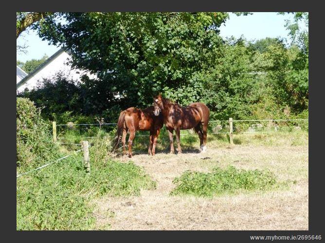 Main image for New Thatch Farm Pet,New Thatch Farm, Scarteen, Knocklong, County Limerick, Ireland