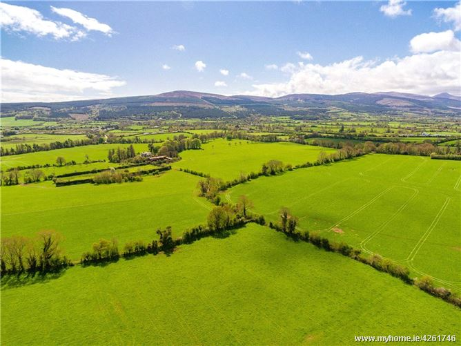 Lot 2 - C.46acres(115acres), Kilmoyler, Cahir, Co. Tipperary