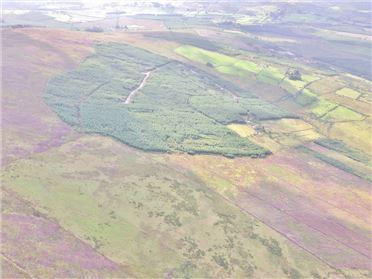 Main image of Land c. 203 Acres/ 82.2 HA., Carrigacurra, Valleymount, Wicklow