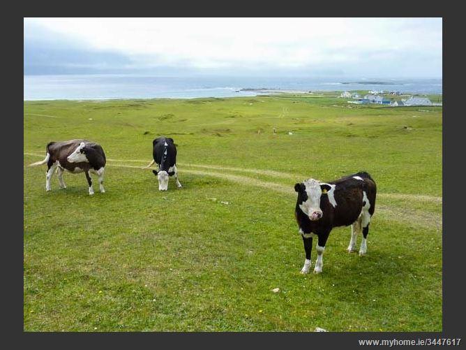 Main image for 6 Lios na Sioga,6 Lios na Sioga, Belmullett, County Mayo, Ireland