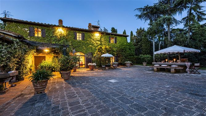 Main image for A Cypress Tree in the Lemon Grove,Florence,Tuscany,Italy