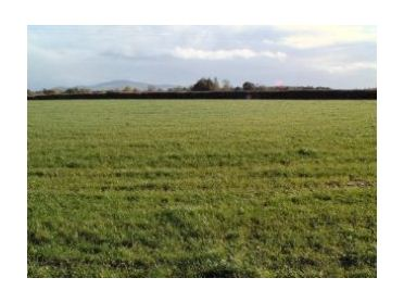 Main image of Coolbawn, Fethard, Co. Tipperary