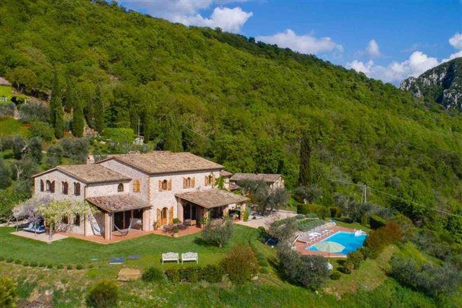 Main image for Wild Olive,Perugia,Umbria,Italy