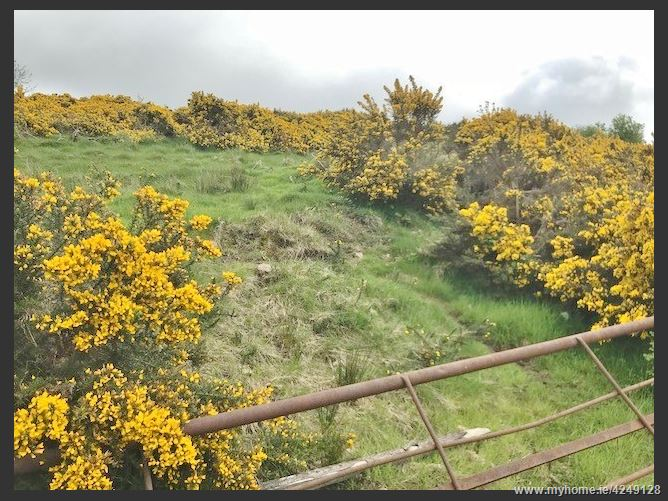 Land c. 2.62 Acres/ 1.06 Ha., Broughills Hill, Hollywood, Wicklow
