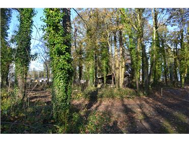 Main image of Site 21 Temple Wood, Carton Demesne, Maynooth, Co. Kildare