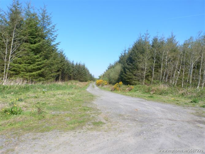 Photo of Kilcruise, c.15 Hectares Forestry, Wolfhill, Timahoe, Laois