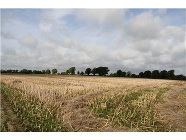 Photo of 18.5 Acres, Martinstown, Curragh, Kildare