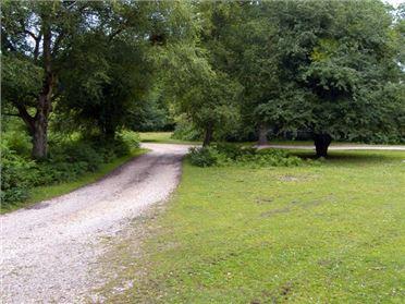 Main image of Endymion Pet,Linwood, Hampshire, United Kingdom