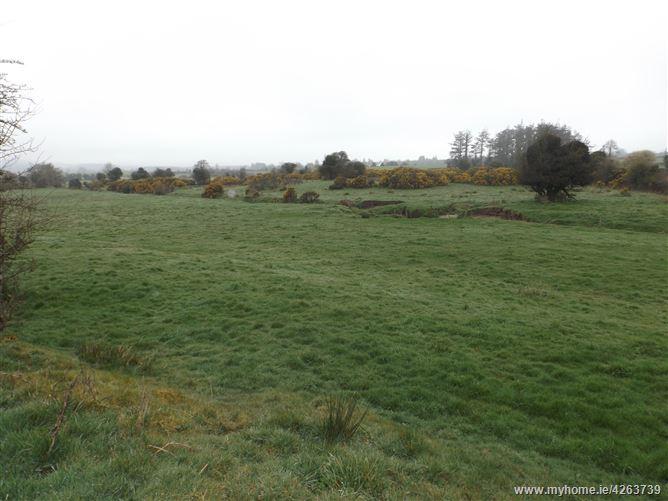 Main image for c. 9.81 acres, Derrylusk, Mountrath, Laois