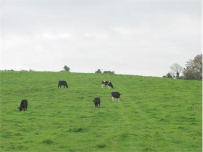The Lodge, Ballingoola, Grange, Co. Limerick