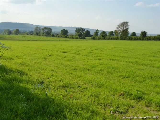 Desart Orchard, Cuffesgrange, Kilkenny